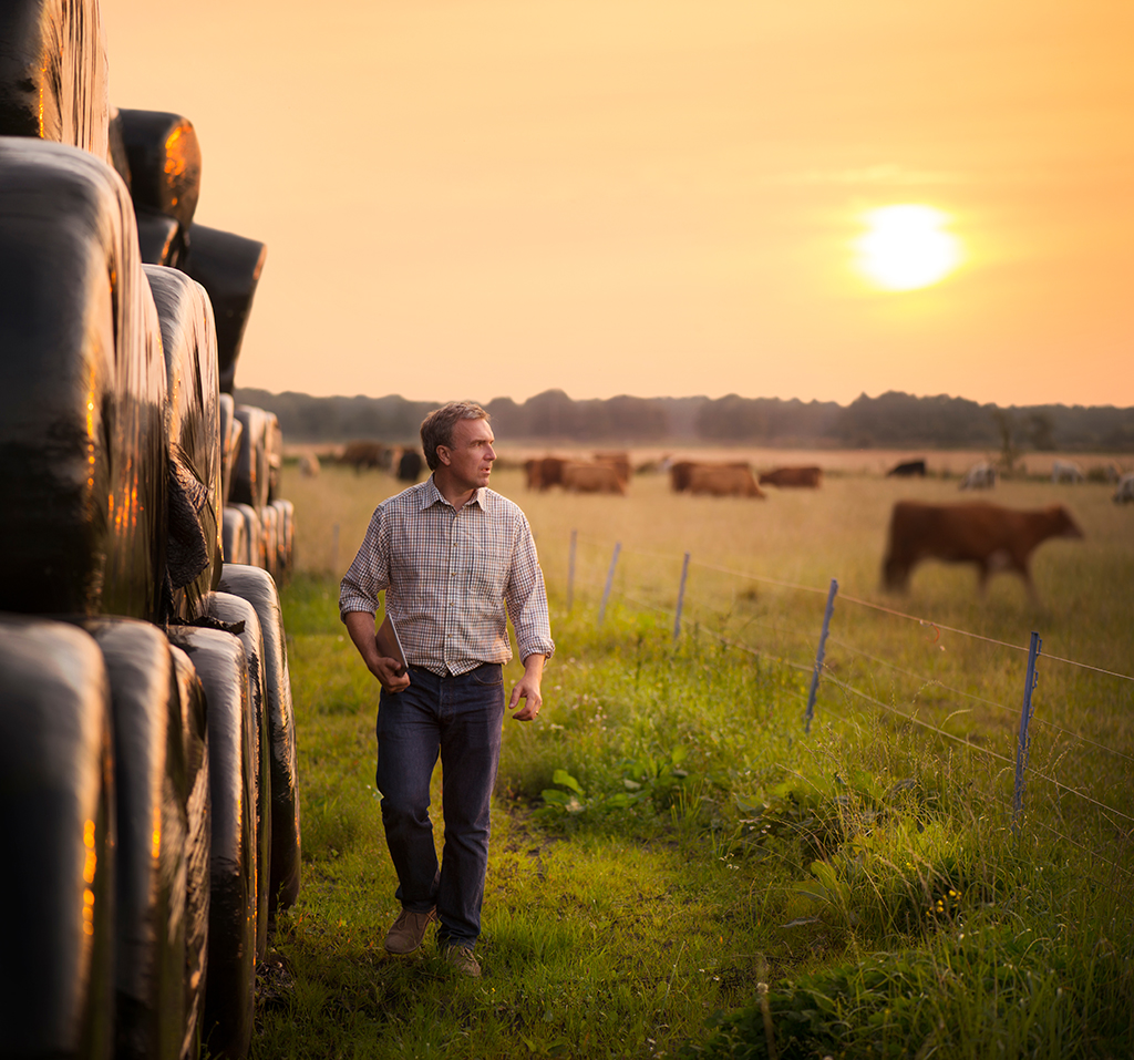 farmer checking his cattle